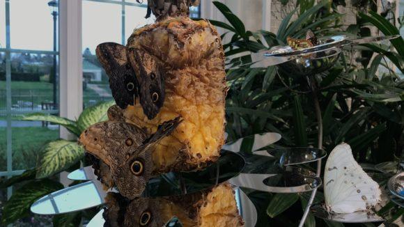 Hershey Gardens Butterfly area