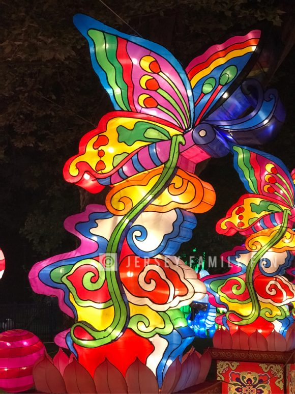 A butterfly lantern from the butterfly gallery at the Philadelphia Chinese Lantern Festival