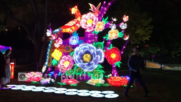The flowers open and close in this Philadelphia Chinese Lantern Festival lantern.