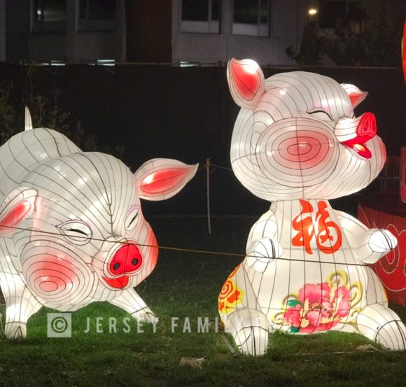 Students developed the pig lanterns at the Philadelphia Chinese Lantern Festival.