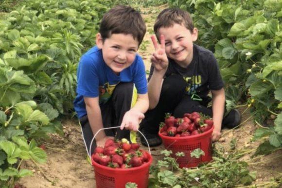 kids picking strawberries at Von Thun Farm in New Jersey