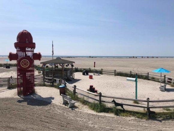 Wildwood dog beach