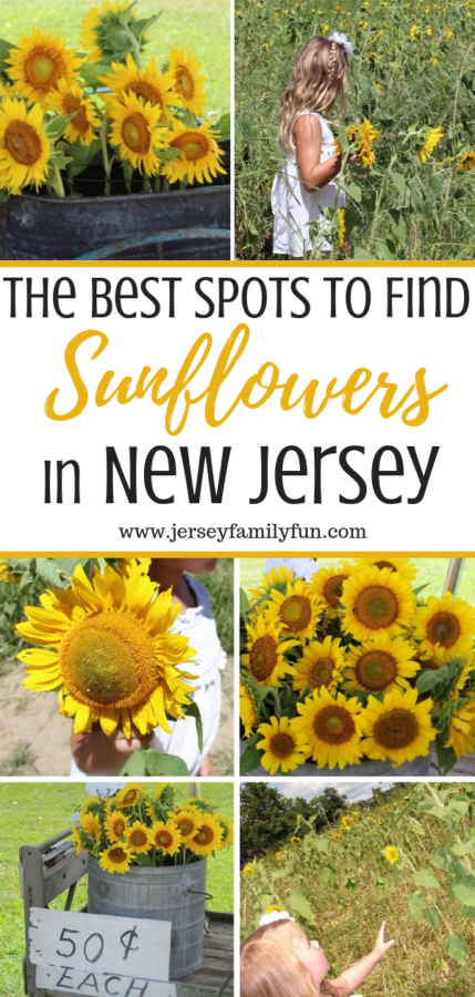 The Best Spots to find sunflowers in New Jersey pinterest image