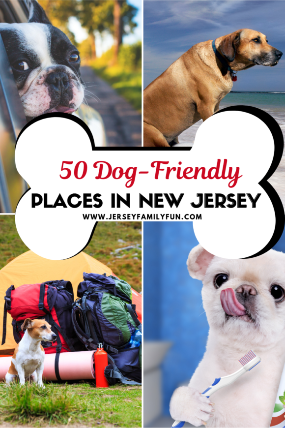 50 Dog friendly places in New Jersey