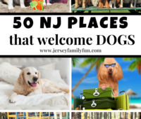 50 NJ Places that welcome dogs