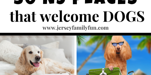 50+ Places to Take Your Dog in New Jersey
