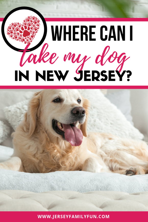 Where can I take my dog in New Jersey?
