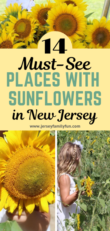 Must see places with sunflowers in New Jersey pinterest