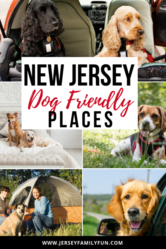New Jersey Dog Friendly places