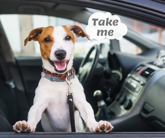Where Can I Take My Dog in New Jersey? ~ Jersey Family Fun