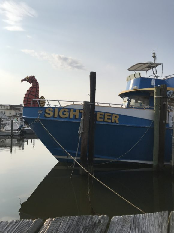 Big Blue Sightseer Whale and Dolphin Cruises in Wildwood