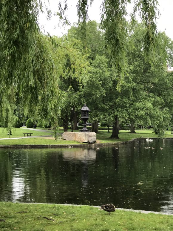 Pond in Boston Public Garden
