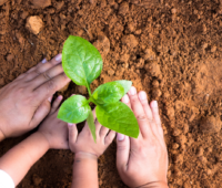 Kid planting in the garden with adult