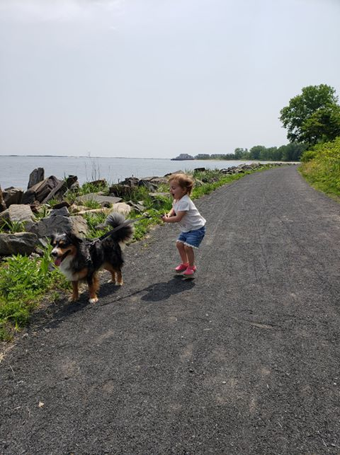 The Roberts family dog, Shadow, an Australian Shepherd mix rescue dog hikes the Henry Hudson Trail in Atlantic Highlands
