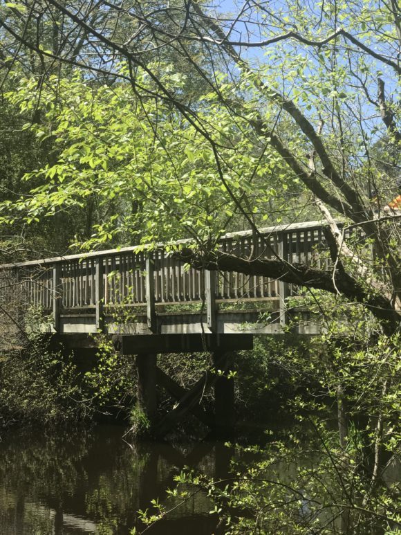 Bridge at Parvin State Park
