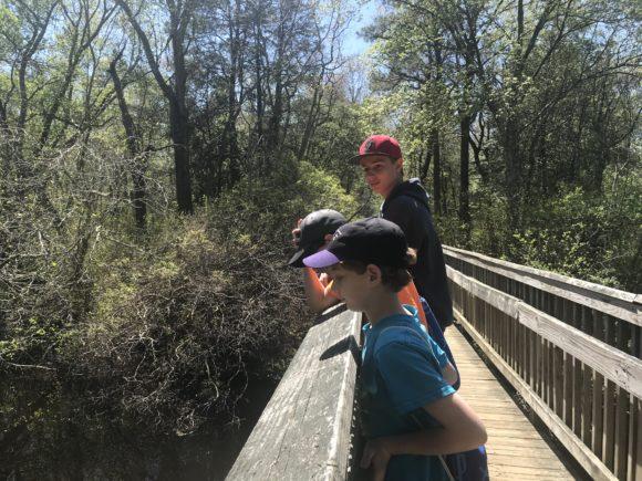 Bridge at Parvin State Park