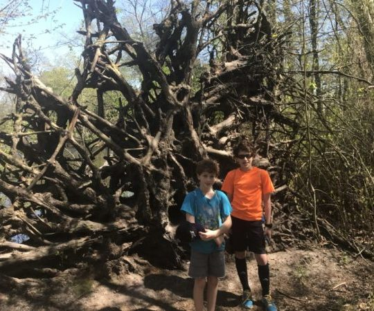 Parvin State Park tree structure on Parvin Lake Trail
