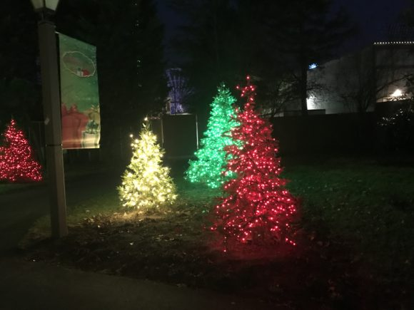 colorful lighted Christmas trees at Six Flags Great Adventure in Jackson New Jersey