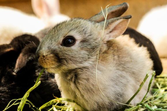 a baby rabbit at a drive thru animal farm