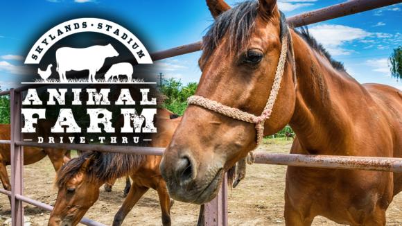 horses at the Skyland stadium animal farm drive thru