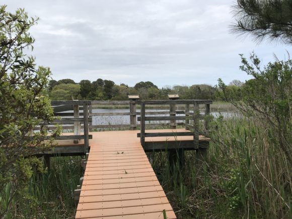 a deck overlooking pond at Cape May Point State Park