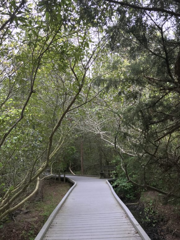 Cape May Point State Park offers hiking along boardwalk trails