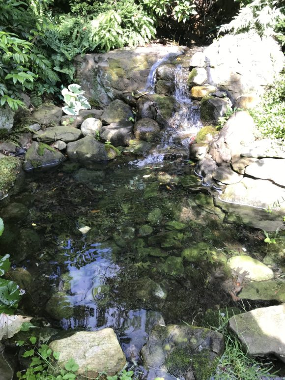 A babbling brook at Reeves - Reed Arboretum