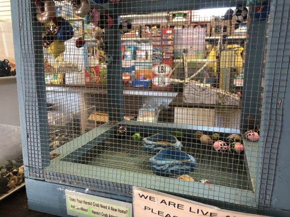 The Bay Village toy store sells hermit crabs to those taking Tuckerton staycations.