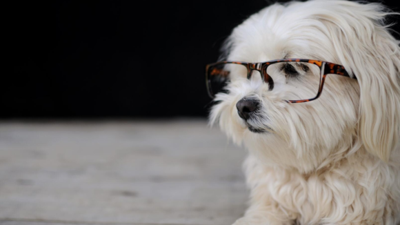 Zoom background of dog with glasses