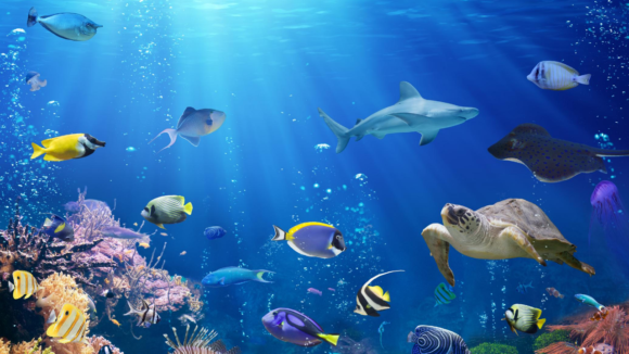 Zoom background of underwater ocean with fish, turtle, stingray, and shark