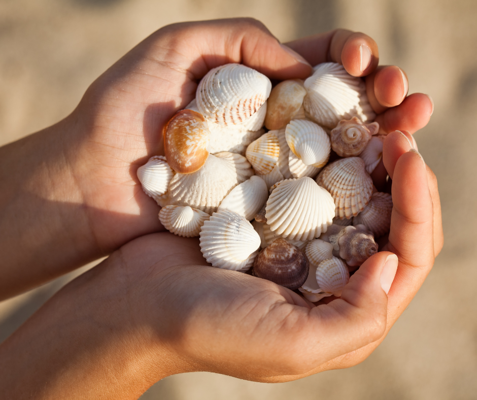 hands holding a group of shells