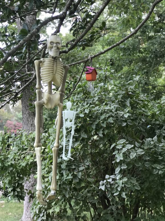 Glow in the dark skeleton hang from a tree as part of a home's outdoor Halloween decor.