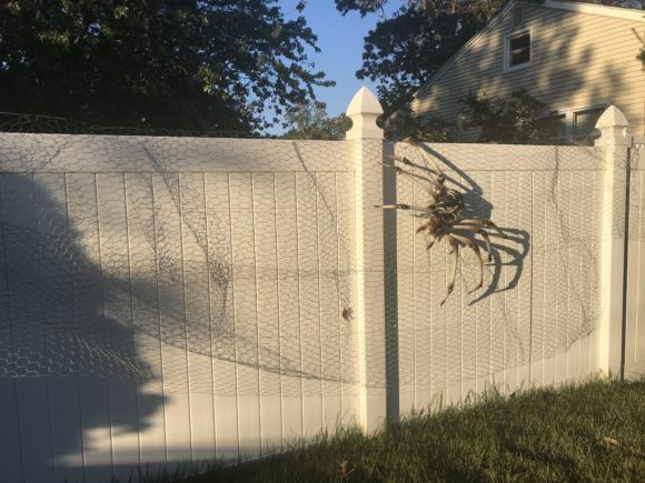 a giant spider skeleton hangs on an outside spider web made from chicken wire.