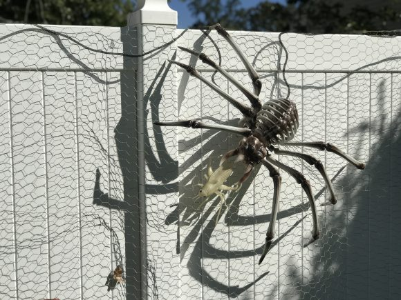 Outdoor Halloween decor a giant spider from Oriental Trading Company climbs across a spider web trying to catch a fly.