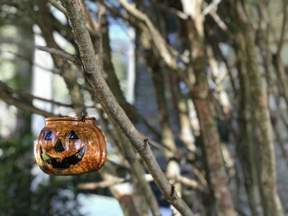 Glass pumpkin with birdseed inside hangs from a tree.