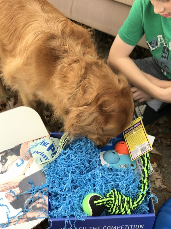 golden retriever digs into the pack a gift box of dog toys.