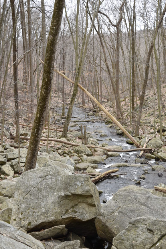 a stream along the Nj waterfall trail at Hacklebarney State Park