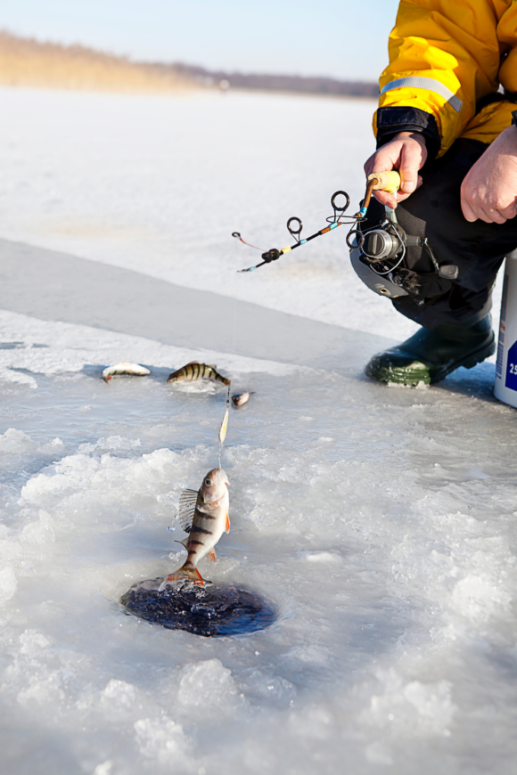 a fisher pulls the fish through the ice at a lake in New Jersey