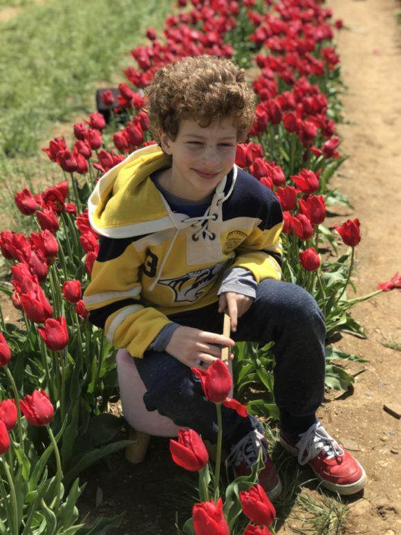 Boy poses with tulips at NJ tulip farm