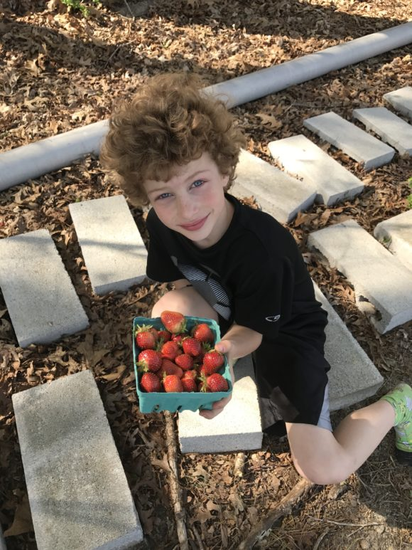 boy holds a pint of strawberries he picked at a NJ farm.