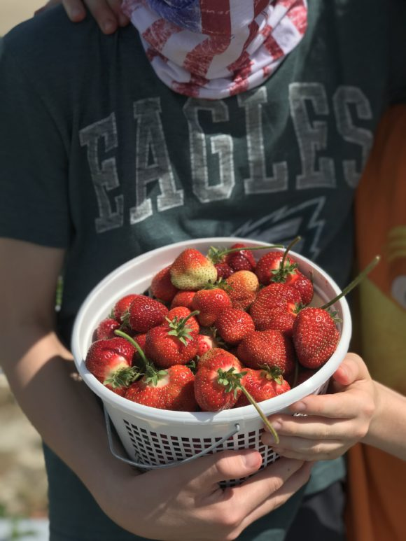 picked at strawberry farm in Galloway NJ