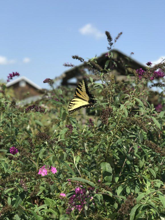 a butterfly garden in New Jersey