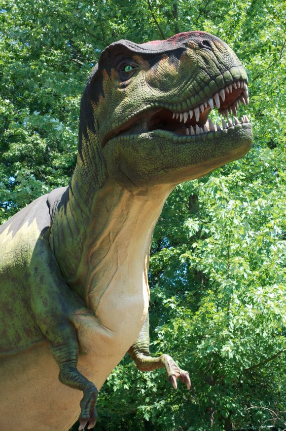 Xpedition Dino Dinosaurs at six flags great adventure T Rex
