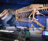 Toddlers and preschoolers enjoy the dinosaur exhibits at the Liberty Science Center