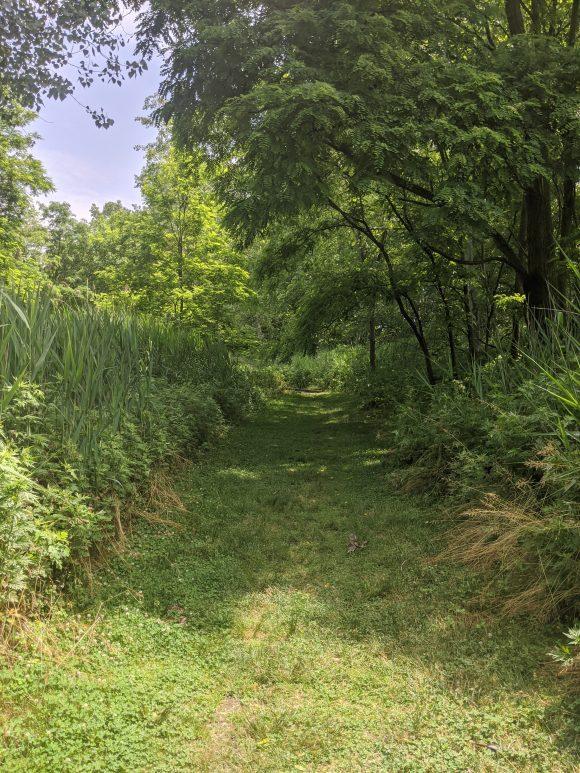 hiking trail at Amico Island in Riverside, NJ