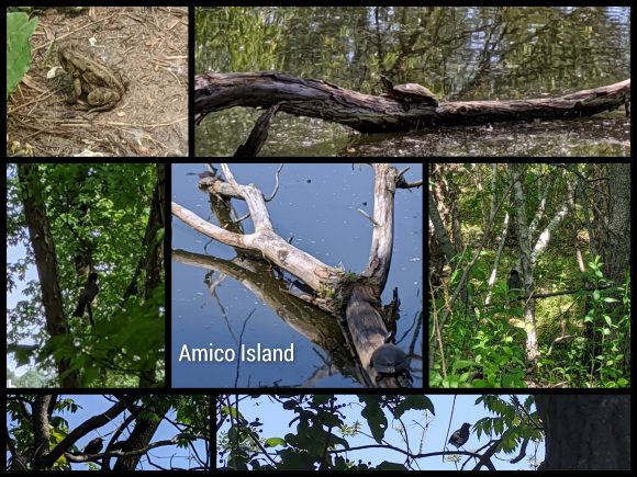collage of pictures from Amico Island in Riverside, NJ