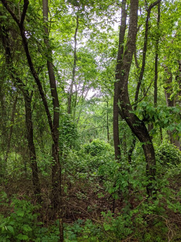 lush greenery at Boundary Creek Park hiking trails in Moorestown NJ