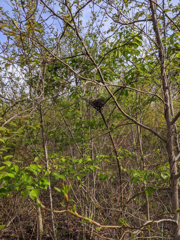 Birds nest seen from hiking trails at Farrago Farm Trail in Moorestown, NJ