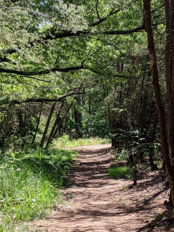 hiking trails at Lake Lonnie in Delran NJ