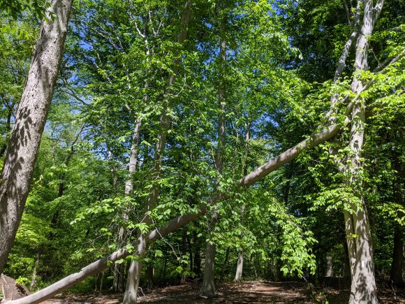 view of trees from hiking trail near Rancocas Creek at Little Woods on the Rancocas